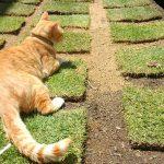 芝を安く植えたい!できるだけ費用を抑え、且つ綺麗に張る方法。