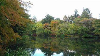 【雲場池】(※写真多数)軽井沢観光には欠かせない「名スポット」。